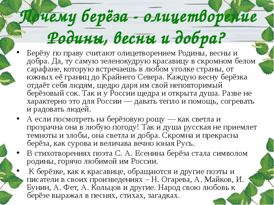 Почему берёза - олицетворение Родины, весны и добра? Берёзу по праву считают...