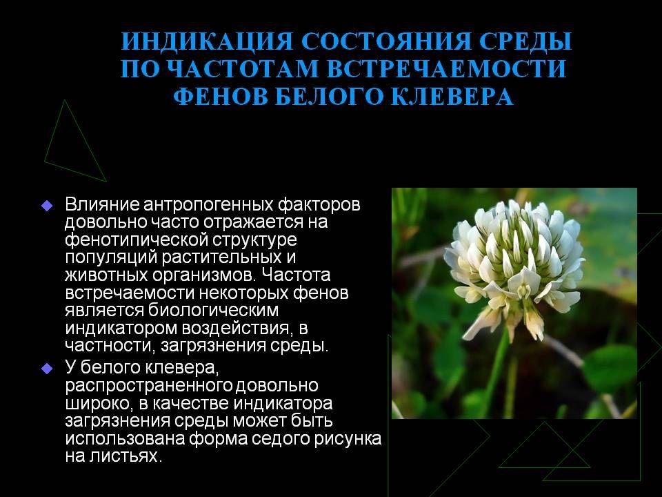 hello_html_m5ae1bdaa.jpg