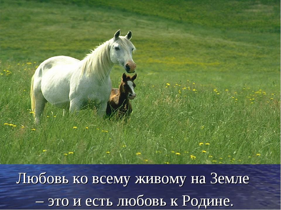 Любовь ко всему живому на Земле – это и есть любовь к Родине.