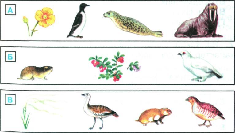 Схема питания в степи в картинках