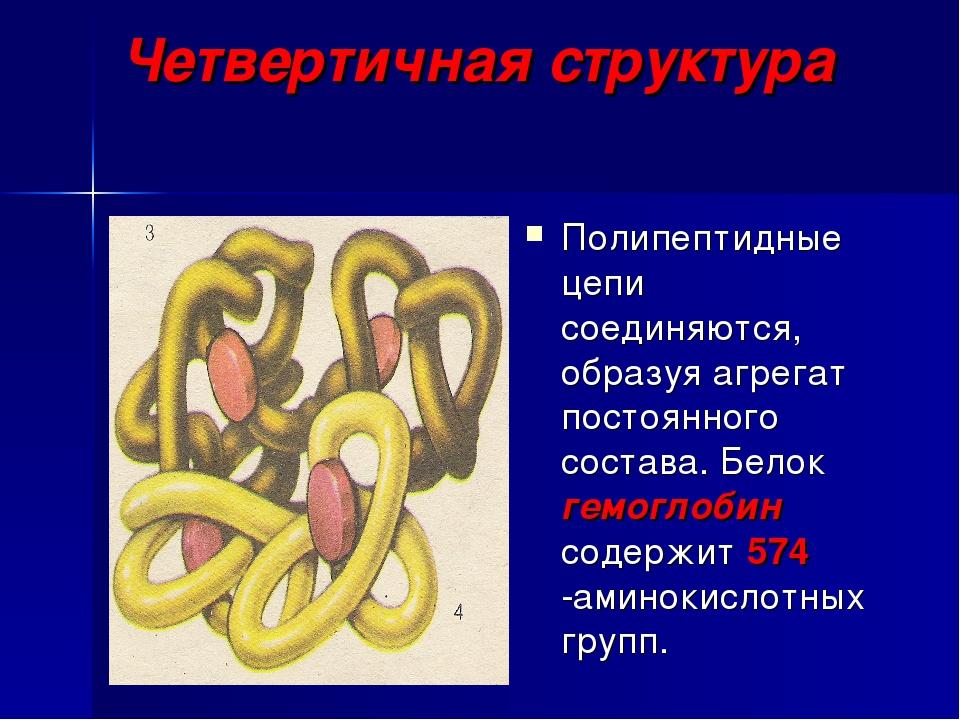 Четвертичная структура Полипептидные цепи соединяются, образуя агрегат постоя...