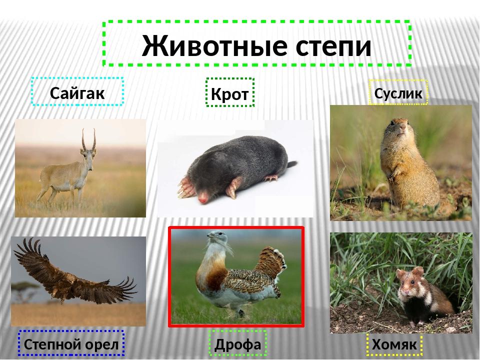 Животные степей картинки и описание