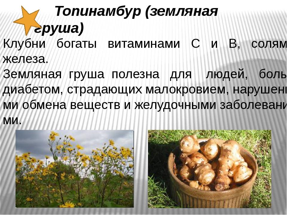 Топинамбур (земляная груша) Клубни богаты витаминами С и В, солями железа. З...