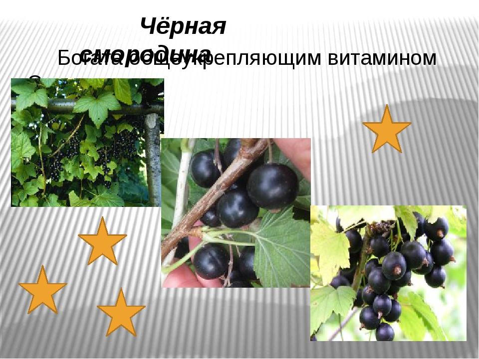 Чёрная смородина Богата общеукрепляющим витамином С.