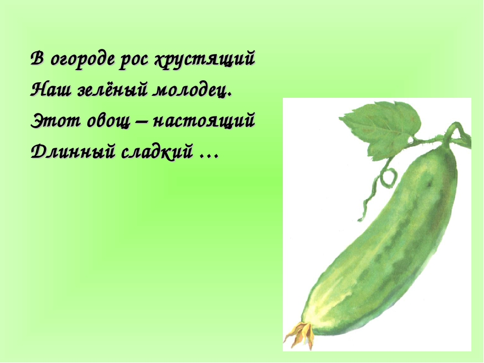 В огороде рос хрустящий Наш зелёный молодец. Этот овощ – настоящий Длинный сл...