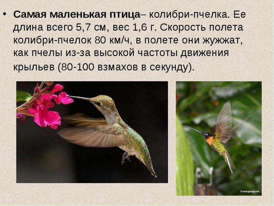 колибри описание птицы душевные