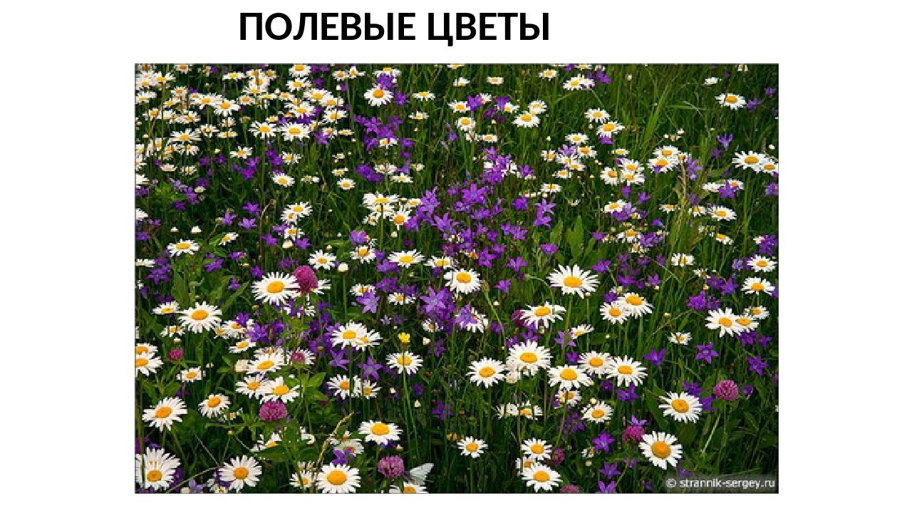 Планета лета ставрополь цветы