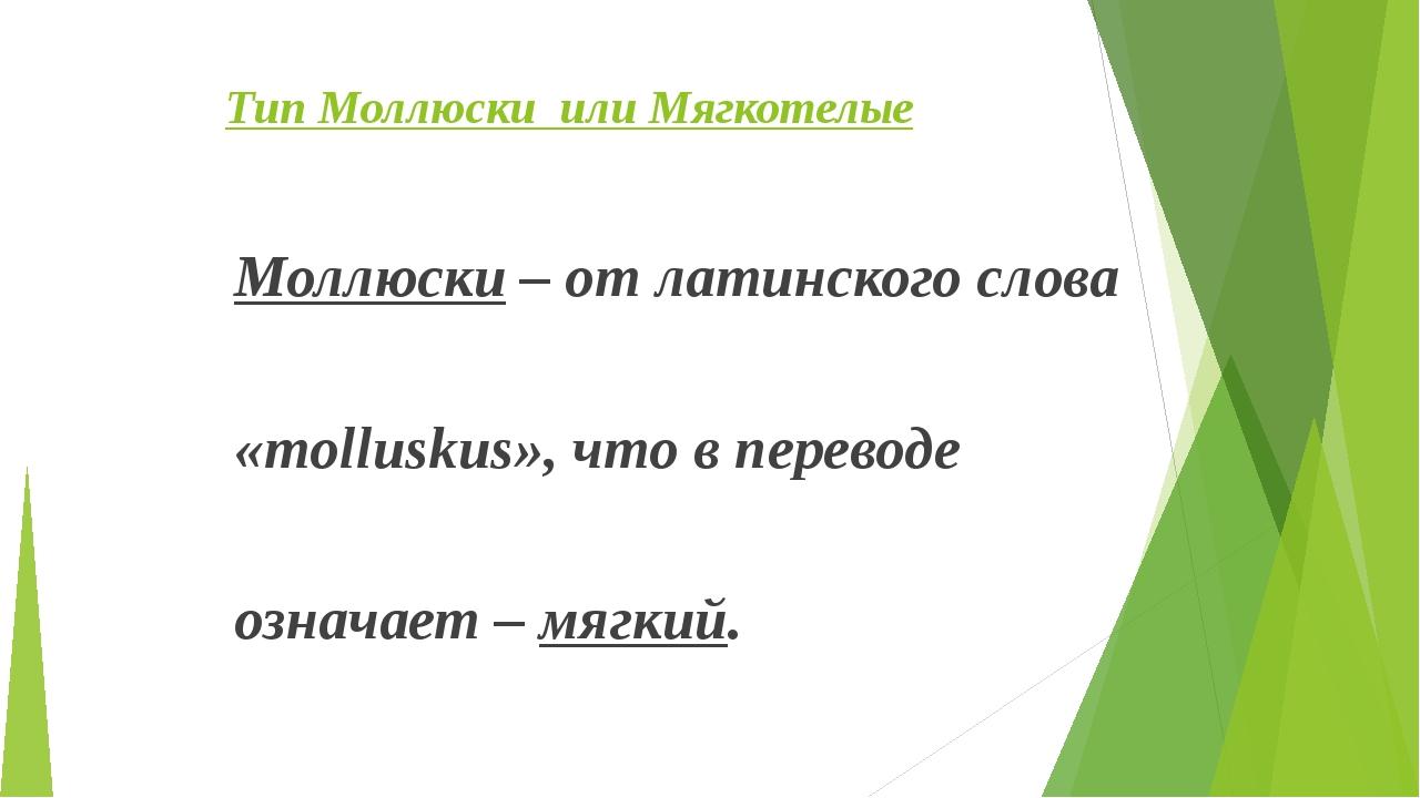Тип Моллюски или Мягкотелые Моллюски – от латинского слова «molluskus», что...