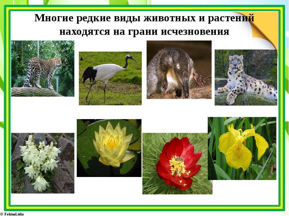растения на грани исчезновения в россии с картинками детально