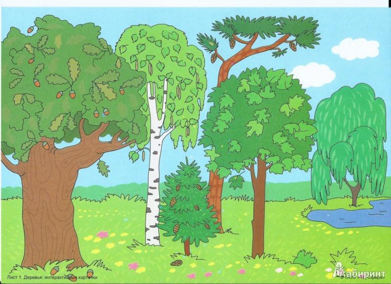 рождения картинки с деревьями для доу время было