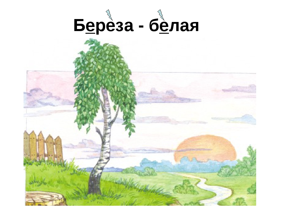 Береза - белая