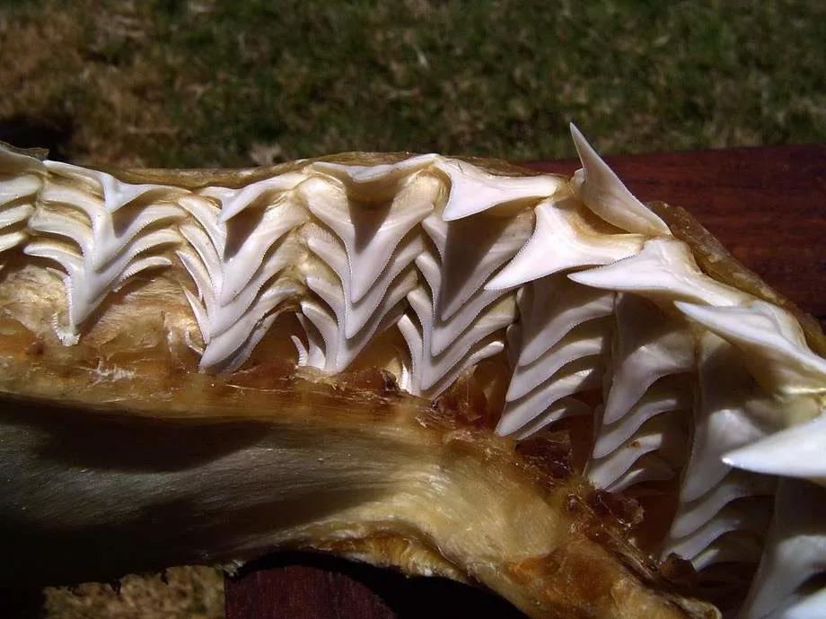 Картинки про зубы акулы