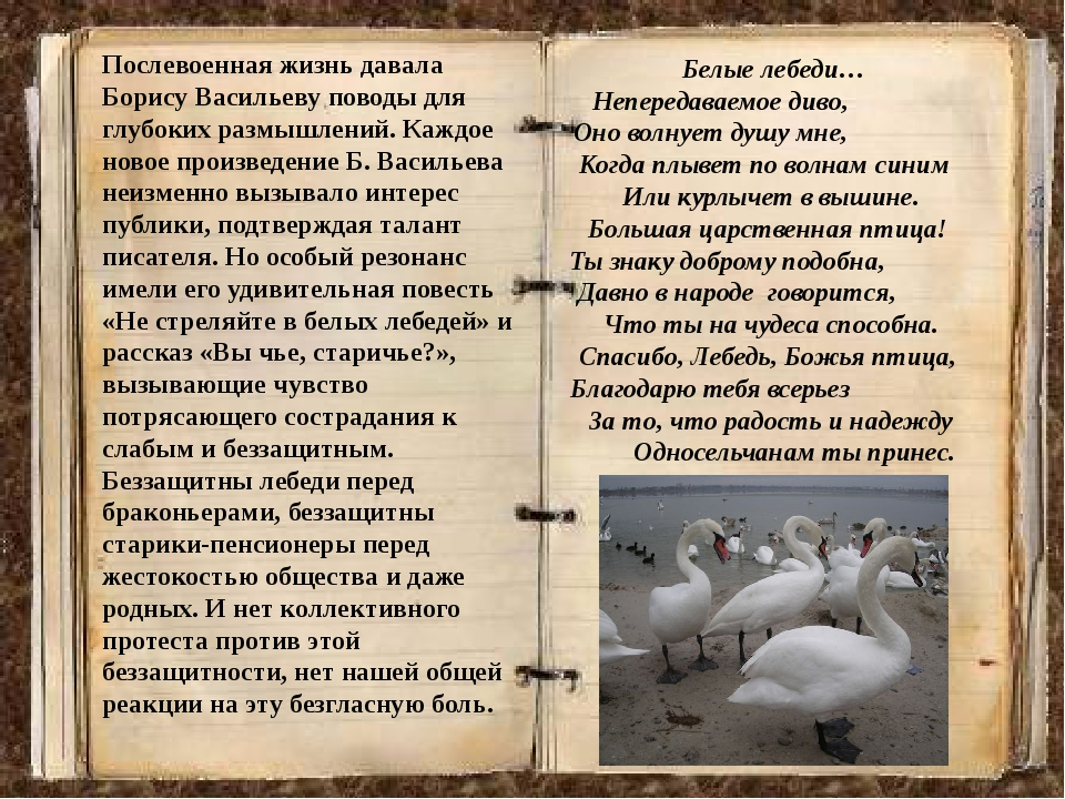Знак не стреляйте в белых лебедей