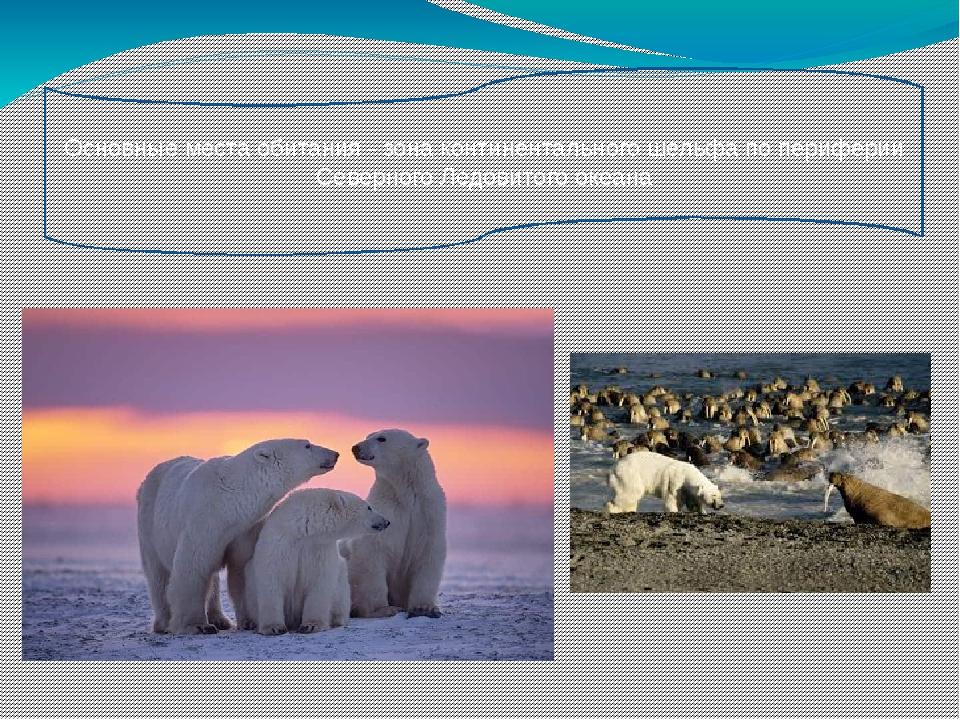 Основные места обитания - зона континентального шельфа по периферии Северного...