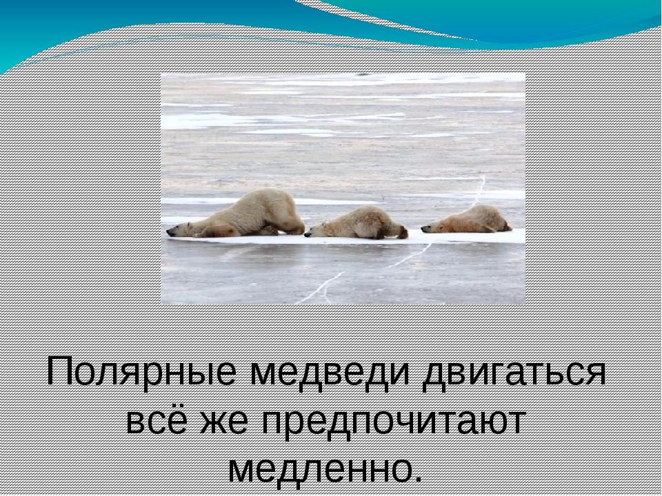 Полярные медведи двигаться всё же предпочитают медленно. Обычно испытывают пр...