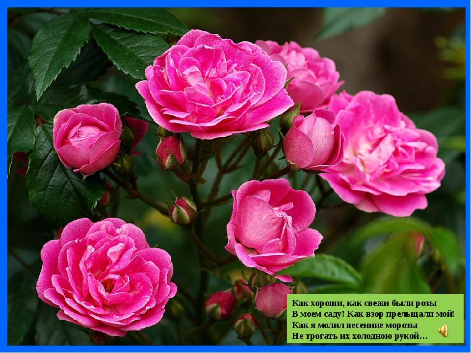 Как хороши, как свежи были розы В моем саду! Как взор прельщали мой! Как я мо...