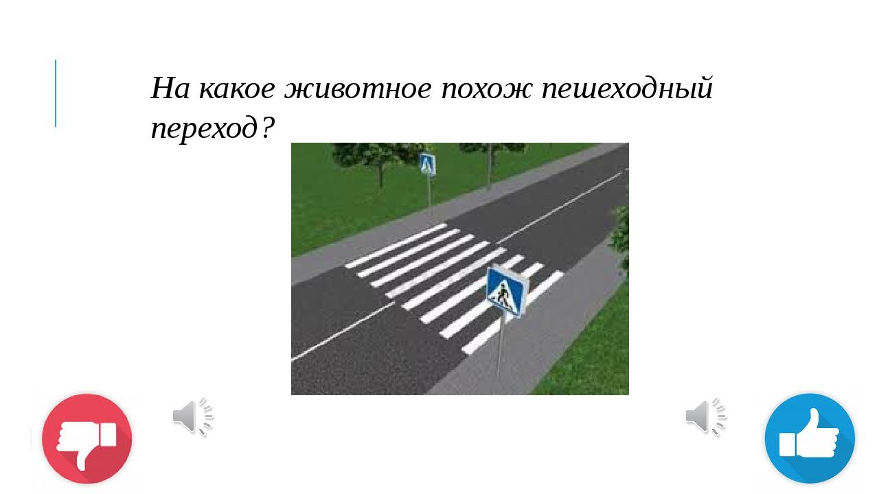На какое животное похож пешеходный переход?