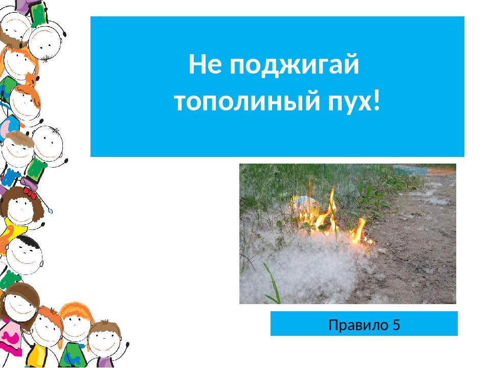 Правило 5 Не поджигай тополиный пух!