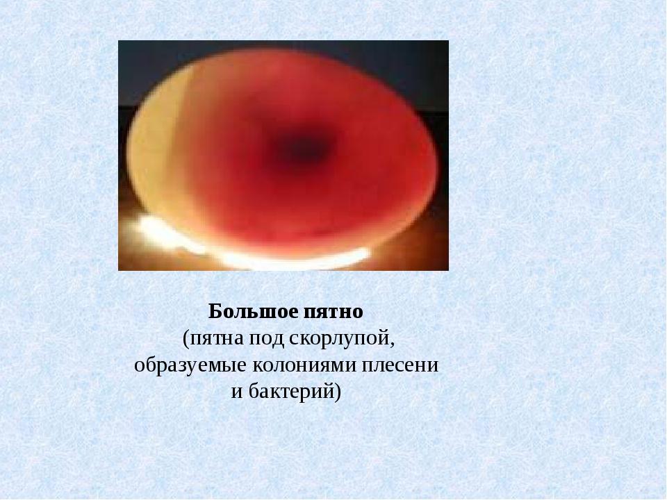 Большое пятно (пятна под скорлупой, образуемые колониями плесени и бактерий)