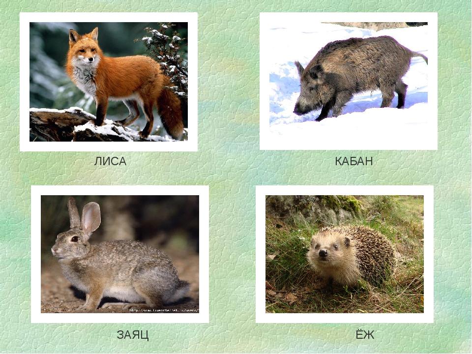 Весной прикольные, картинки с изображением зайца лисы белки волка медведя бурундука ежа