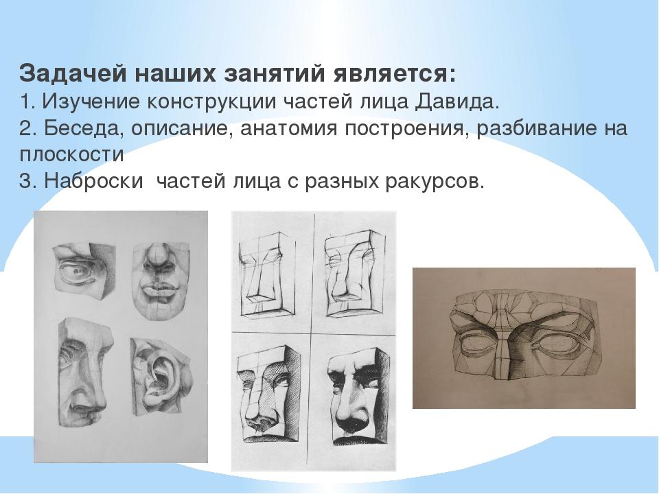 Задачей наших занятий является: 1. Изучение конструкции частей лица Давида....