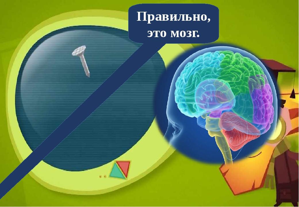 Правильно, это мозг.