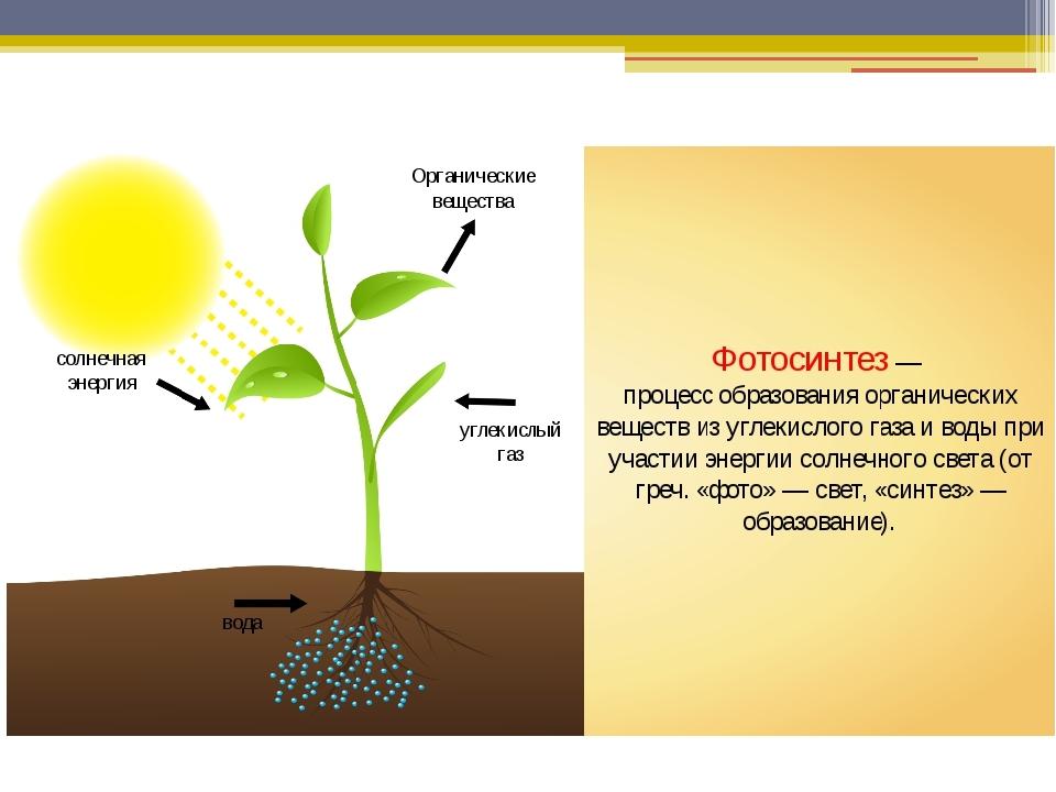 Краткое сообщение о фотосинтезе