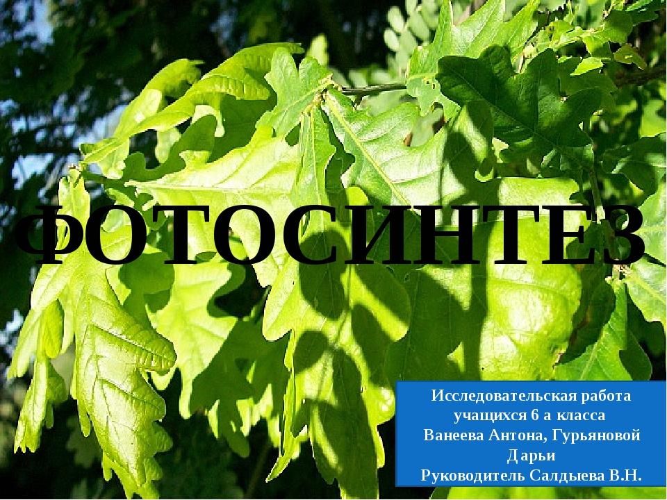 ФОТОСИНТЕЗ Исследовательская работа учащихся 6 а класса Ванеева Антона, Гурья...