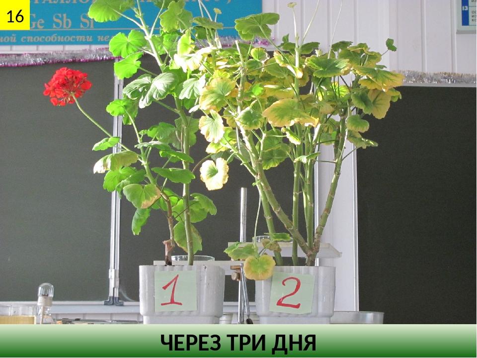 ЧЕРЕЗ ТРИ ДНЯ 16