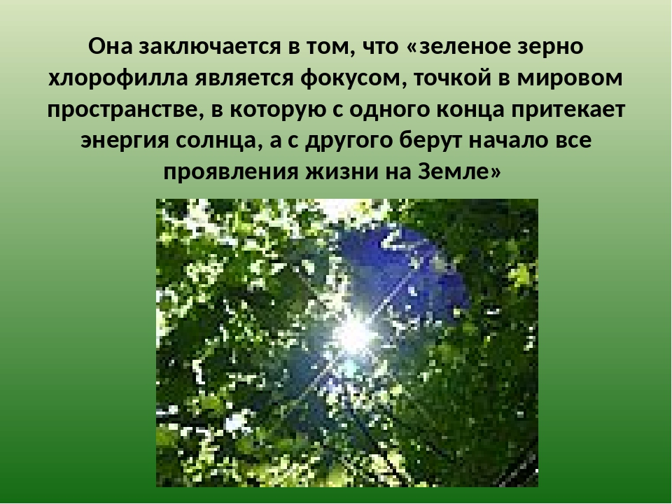 Она заключается в том, что «зеленое зерно хлорофилла является фокусом, точко...