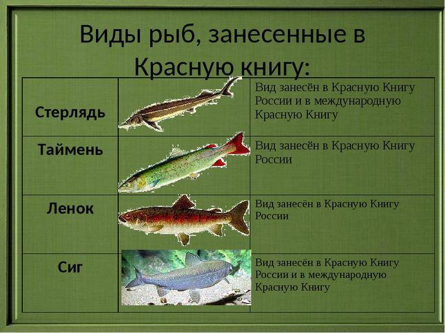 В правилах рыболовства установлен минимальный размер 10 см, при котором разрешается ловить в черноморском регионе, в других - не охраняется.