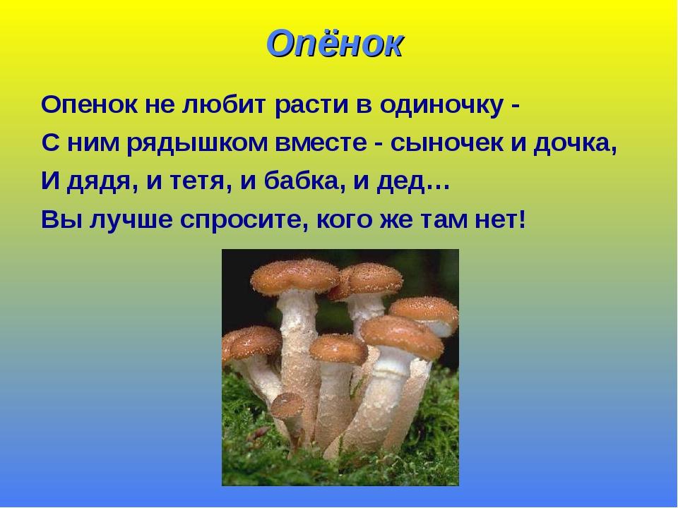 делом о грибах картинки про грибы можете