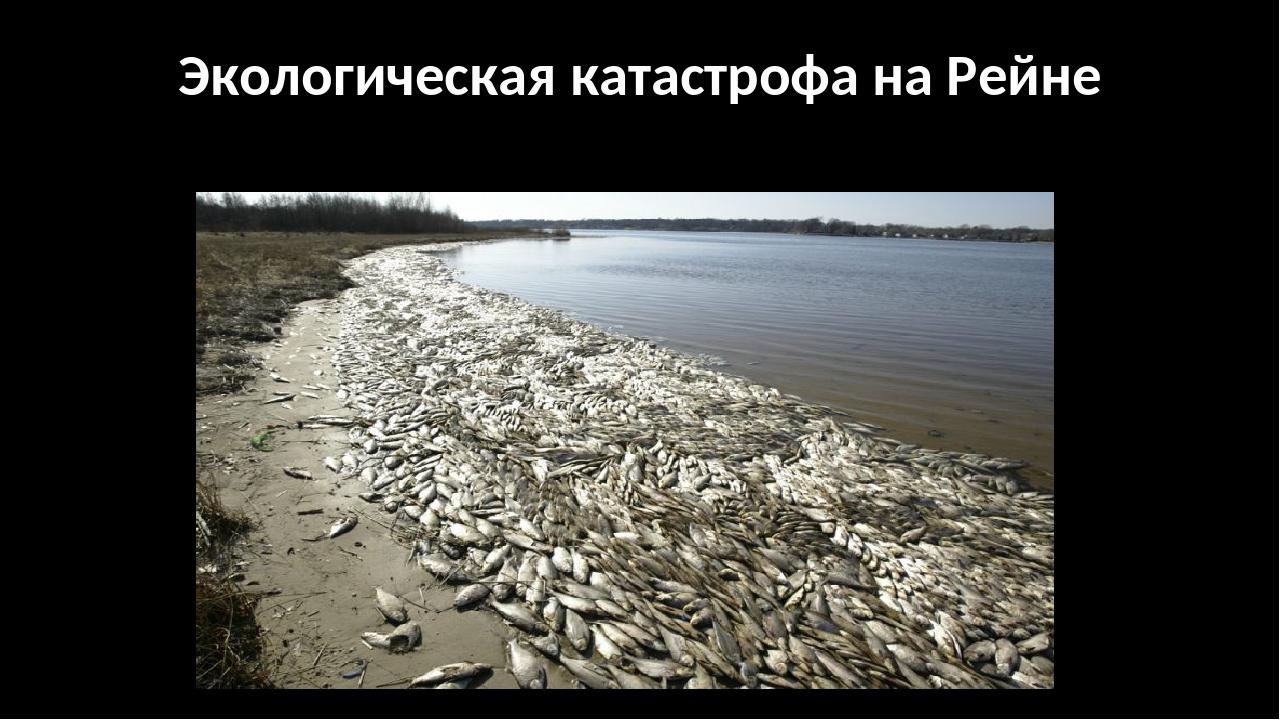 Экологическая катастрофа на Рейне