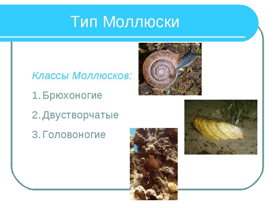 Тип Моллюски Классы Моллюсков: Брюхоногие Двустворчатые Головоногие