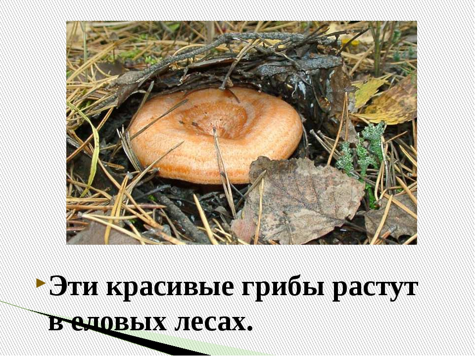 Анимация, картинка с надписью грибы