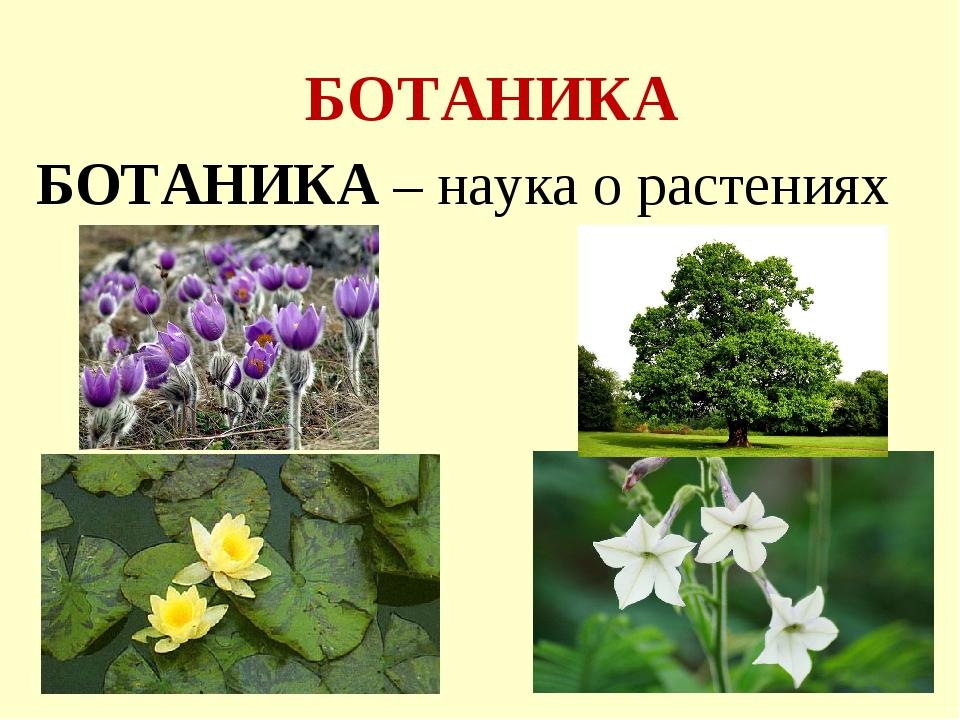 БОТАНИКА БОТАНИКА – наука о растениях