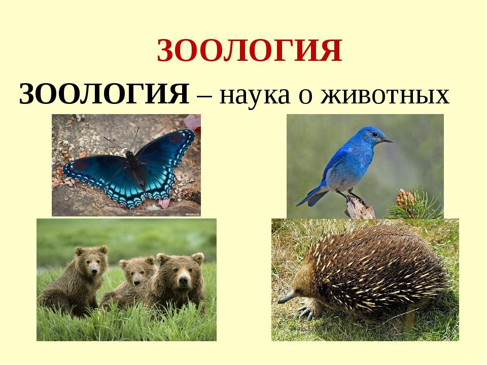 ЗООЛОГИЯ ЗООЛОГИЯ – наука о животных