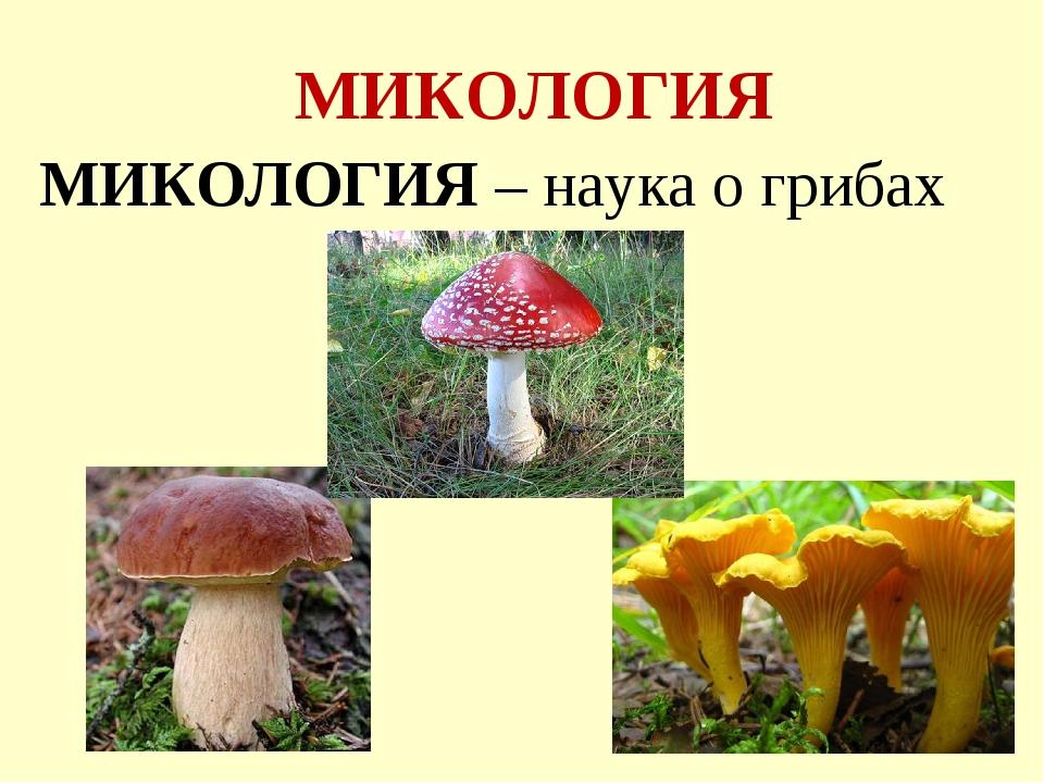 МИКОЛОГИЯ МИКОЛОГИЯ – наука о грибах