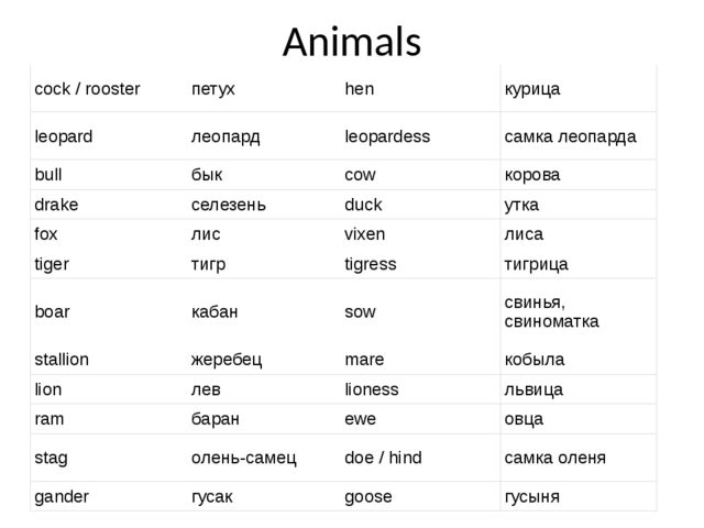 курица во множественном числе по английски