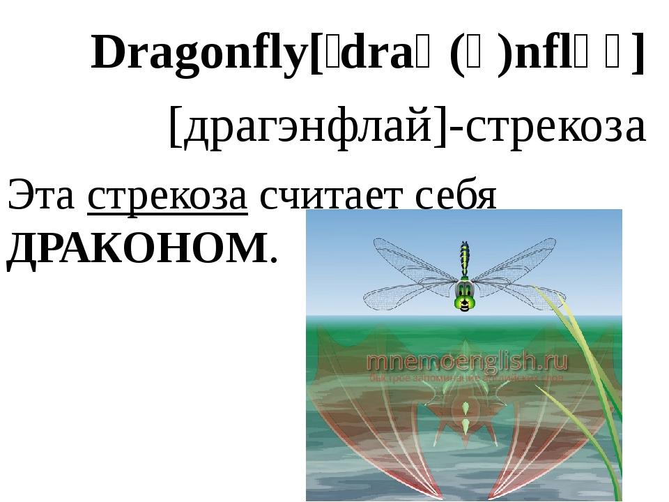 Dragonfly[ˈdraɡ(ə)nflʌɪ] [драгэнфлай]-стрекоза Эта стрекоза считает себя ДРАК...