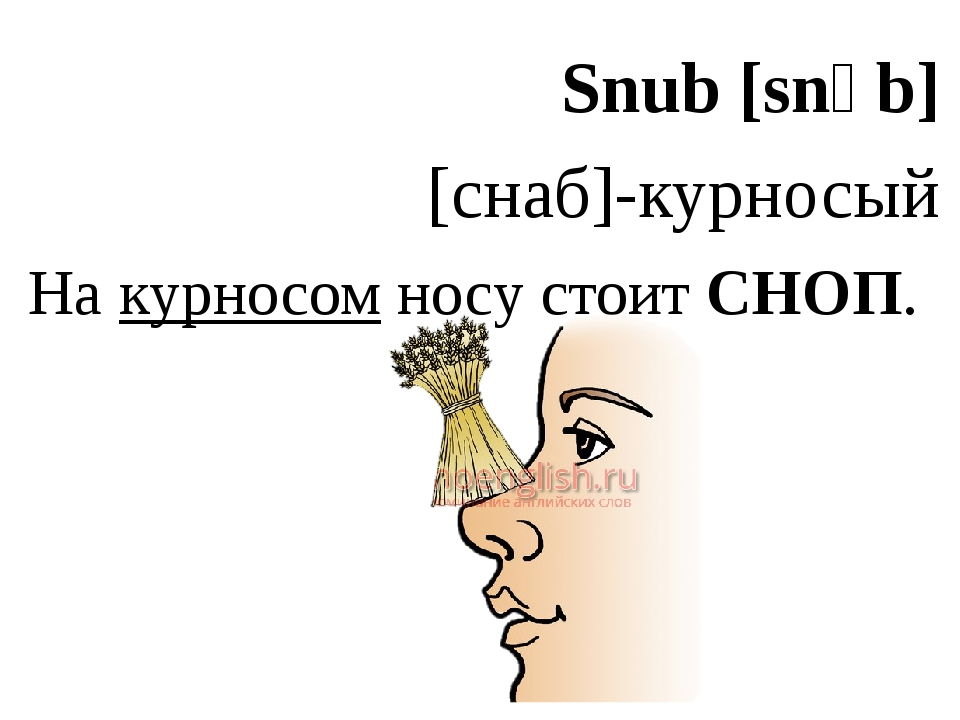 Snub [snʌb] [снаб]-курносый На курносом носу стоит СНОП.