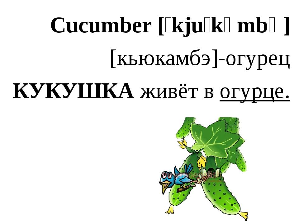 Cucumber [ˈkjuːkʌmbə] [кьюкамбэ]-огурец КУКУШКА живёт в огурце.