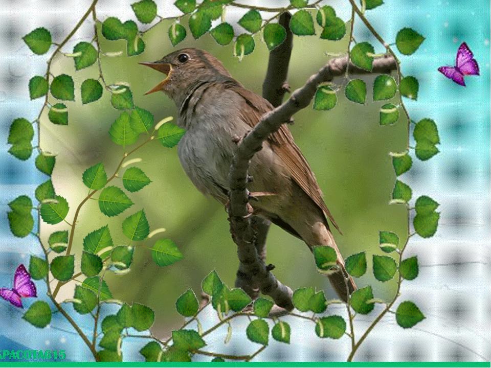 так картинки анимация птицы поют этих дам