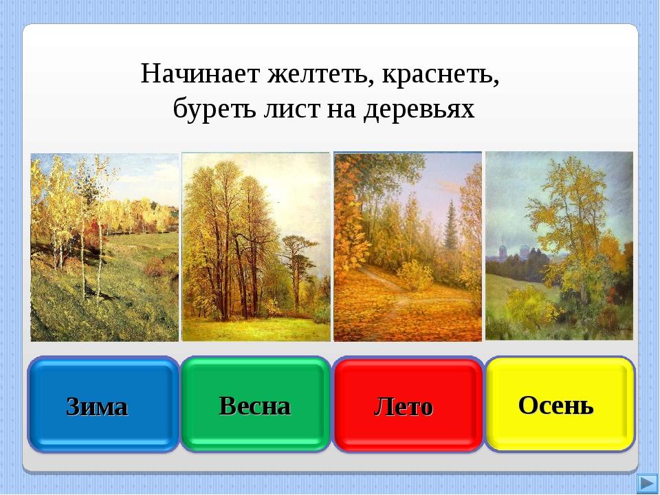 Начинает желтеть, краснеть, буреть лист на деревьях