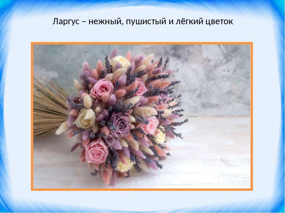 Ларгус – нежный, пушистый и лёгкий цветок