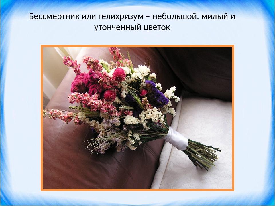 Бессмертник или гелихризум – небольшой, милый и утонченный цветок