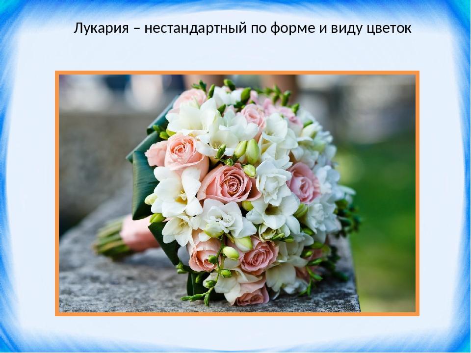 Лукария – нестандартный по форме и виду цветок