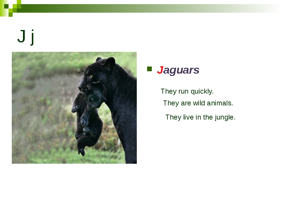 J j Jaguars They run quickly. They are wild animals. They live in the jungle.