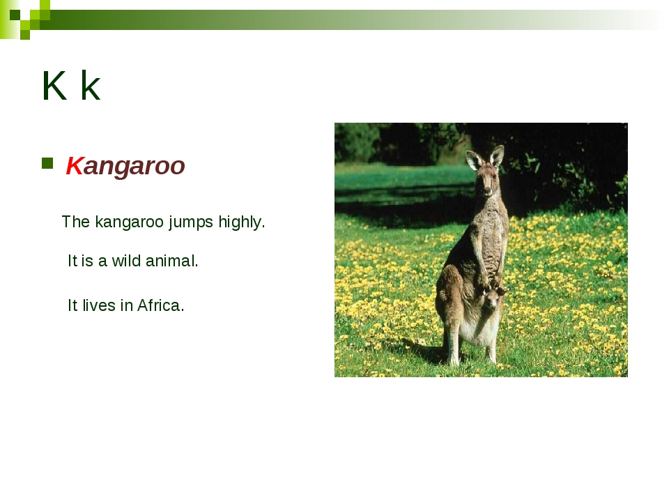 K k Kangaroo The kangaroo jumps highly. It is a wild animal. It lives in Afri...
