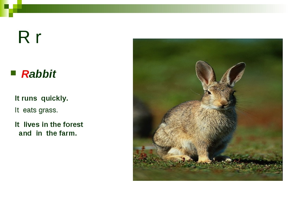 R r Rabbit It runs quickly. It eats grass. It lives in the forest and in the...